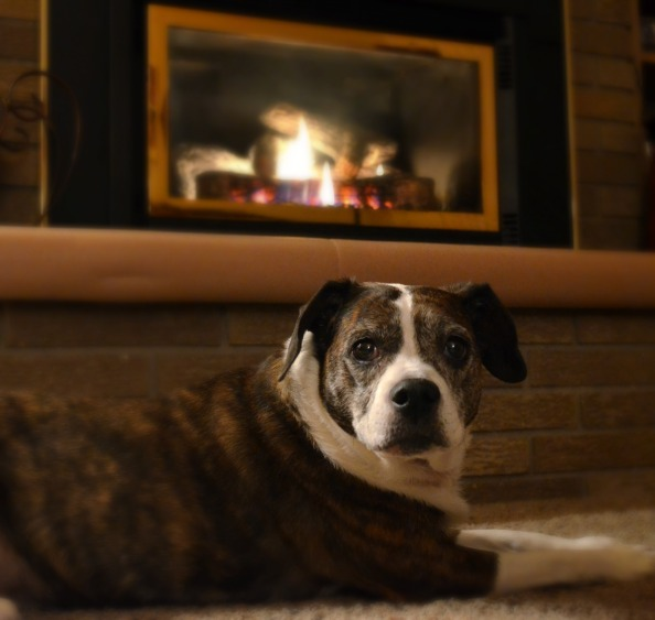 Bo by the fire