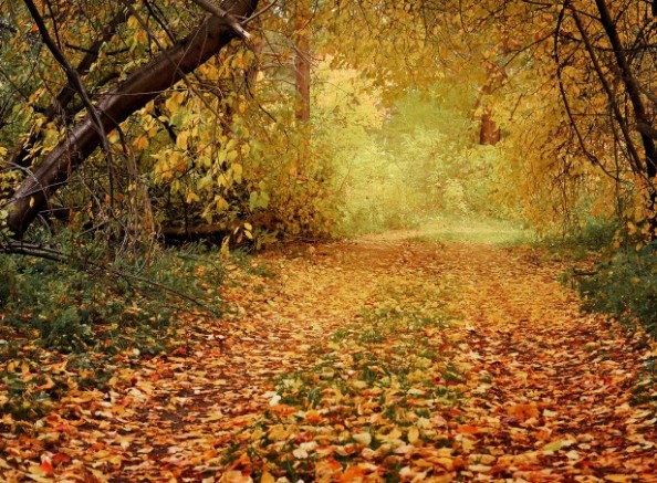 autumn-path-in-the-woods